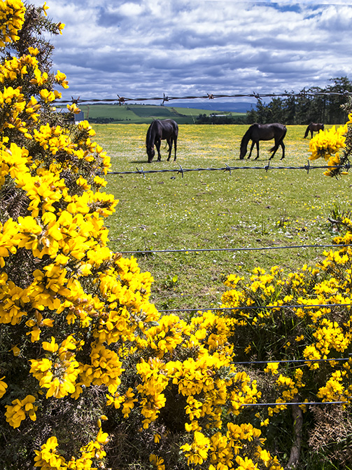 Killen, Black Isle Peninsula, Scotland. ©Calvin Palmer 2013. All Rights Reserved.
