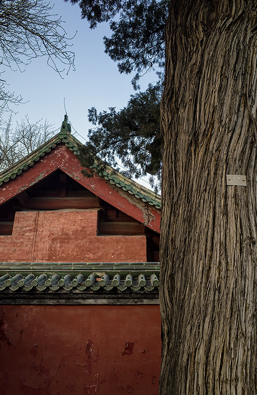 Old tree and traditional Chinese building at Ritan Park, Temple of The Sun, Russia Town, Beijing, China.